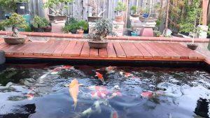 Top 10 công ty thiết kế hồ cá koi chuyên nghiệp tại Tphcm