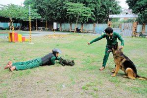 Trung tâm huấn luyện chó Sài Gòn chuyên nghiệp